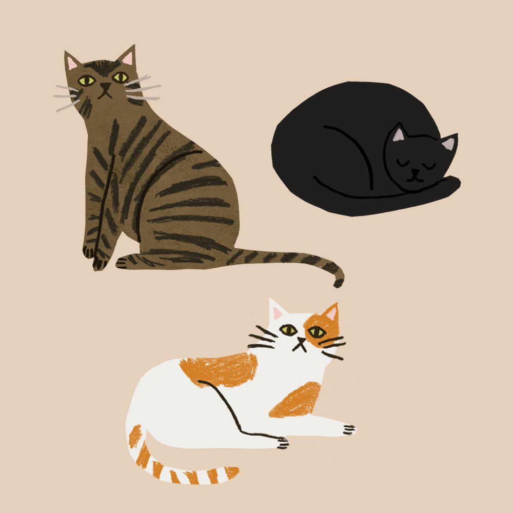 cats - Taaryn Brench.png