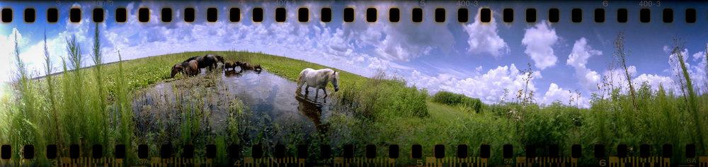 horses on the prairie