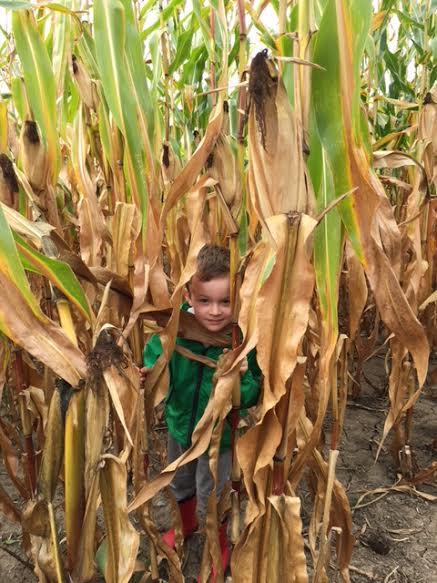 corn maze2.jpeg
