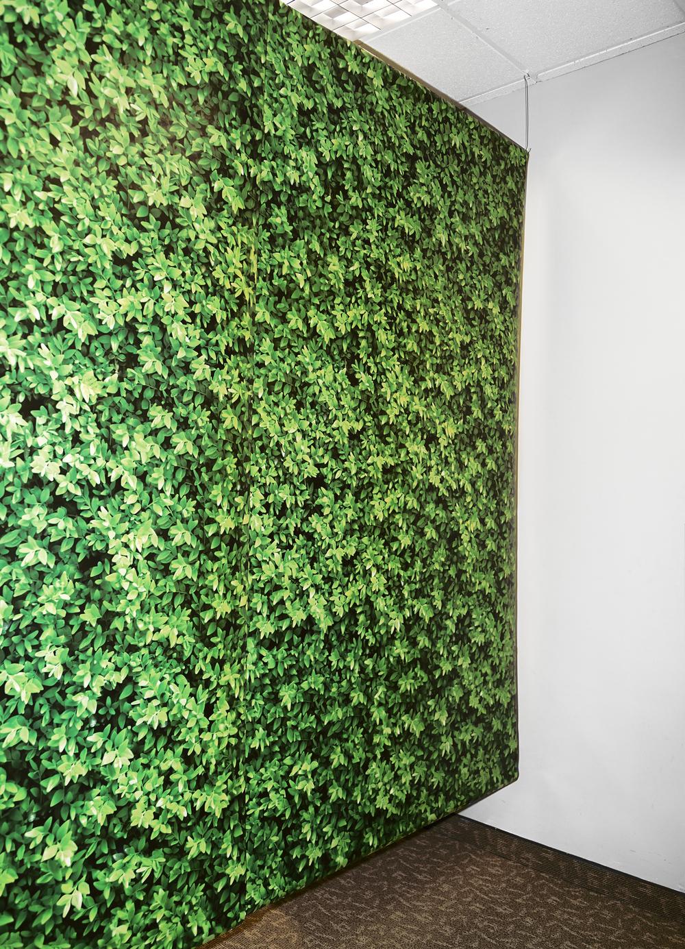 grasswall.jpg