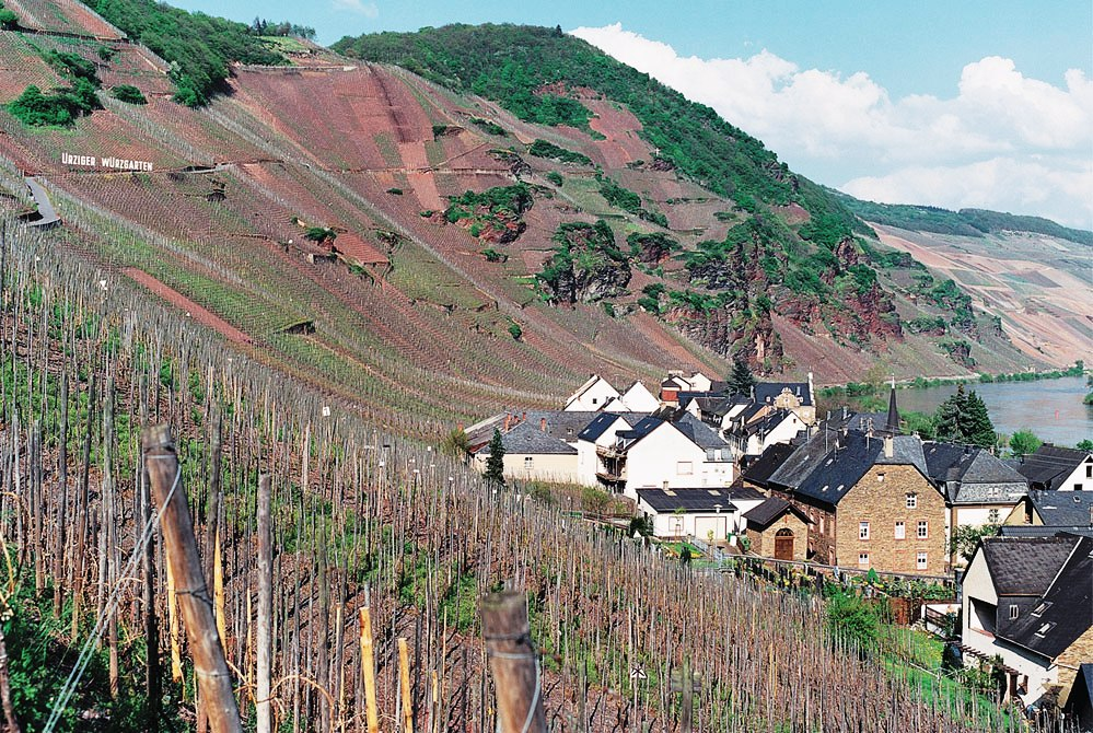Urziger Wurzgarten Vineyard