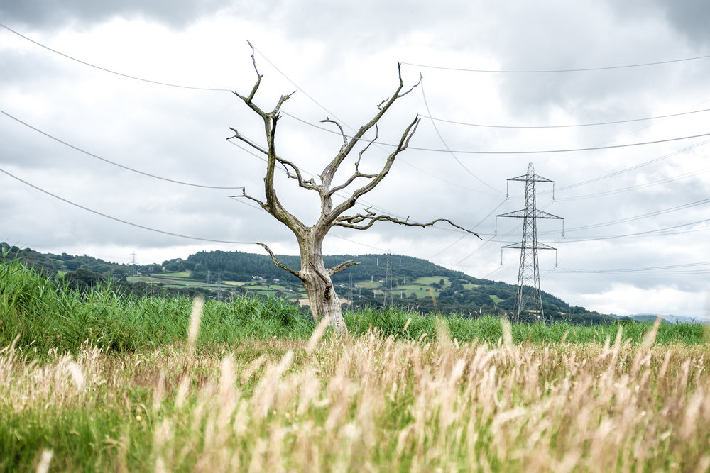 Electricitree