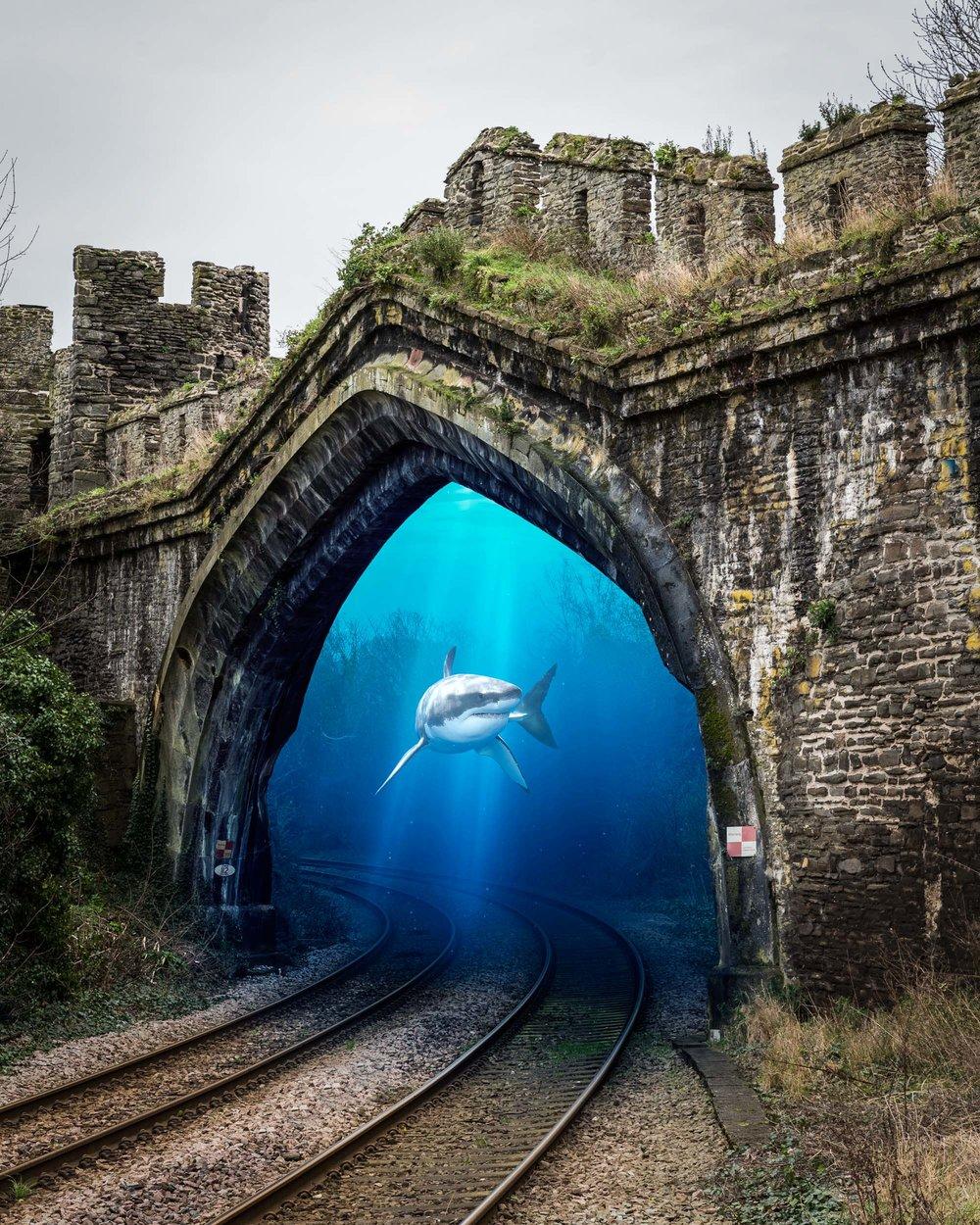 Shark-a-track