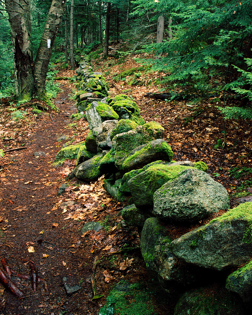 Maine Hiking Trail (Browning Scan).jpg