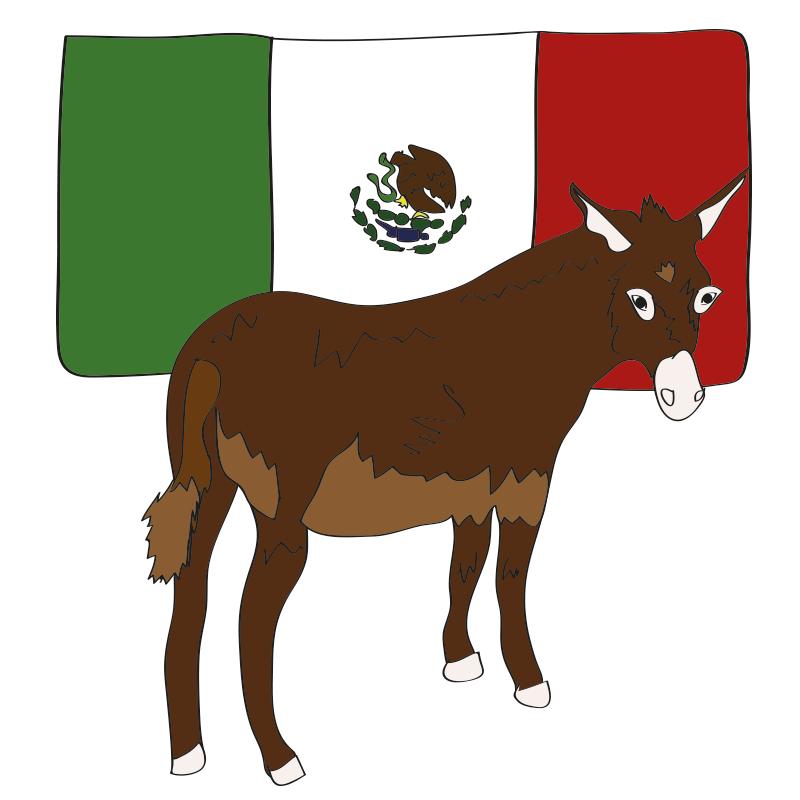 tijuana-mexico-donkey.png
