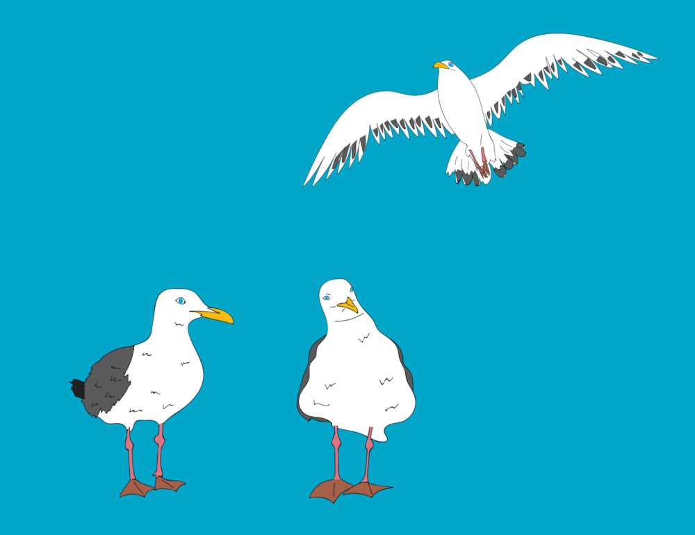 seagull illustration