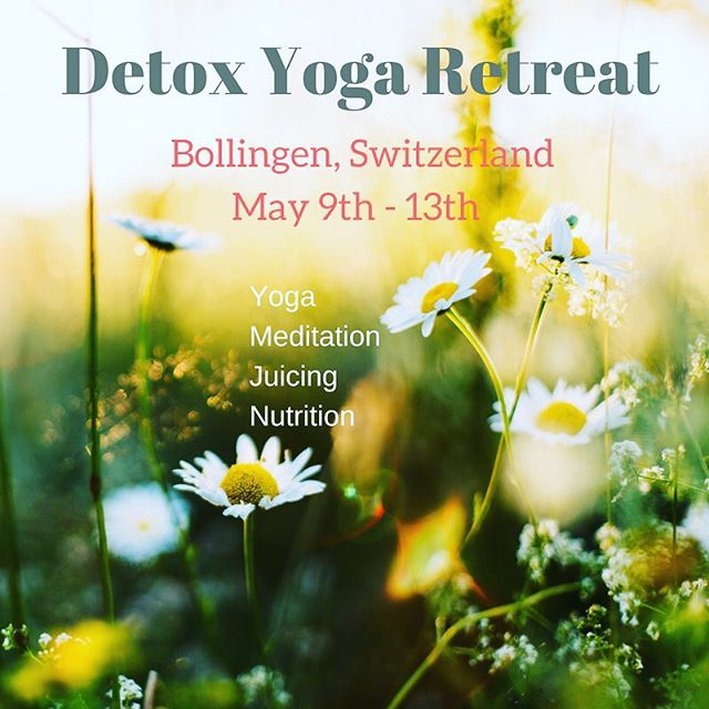 """We have just 2 spots left in our """"Spring Cleaning"""" Detox Retreat in Bollingen! Join us for 5 days of Yoga, Meditation, Juicing & Nutrition Workshops! Emerge a better you, ready for Summer! Link for Info & Registration in Bio.  #javalicious #yogaretreats2018 #yogaretreats #yoga #detox #juicing #nutrition #meditation #getaway #selfcare #javayoga☕️🧘♂️ #yoga🧘♀️ #coffee #coffee☕️ #coffeeandyogatogetheratlast☕️🧘♀️ #wellness😀 #health #morningroutines #morning🌞 #rituals #biohack🤓 #optimal💪"""