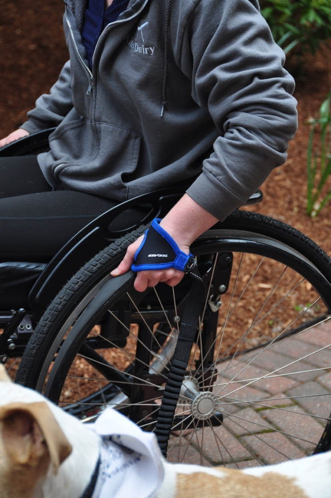 EzyDog Handy Leash  in action with a standard Manual Wheelchair.
