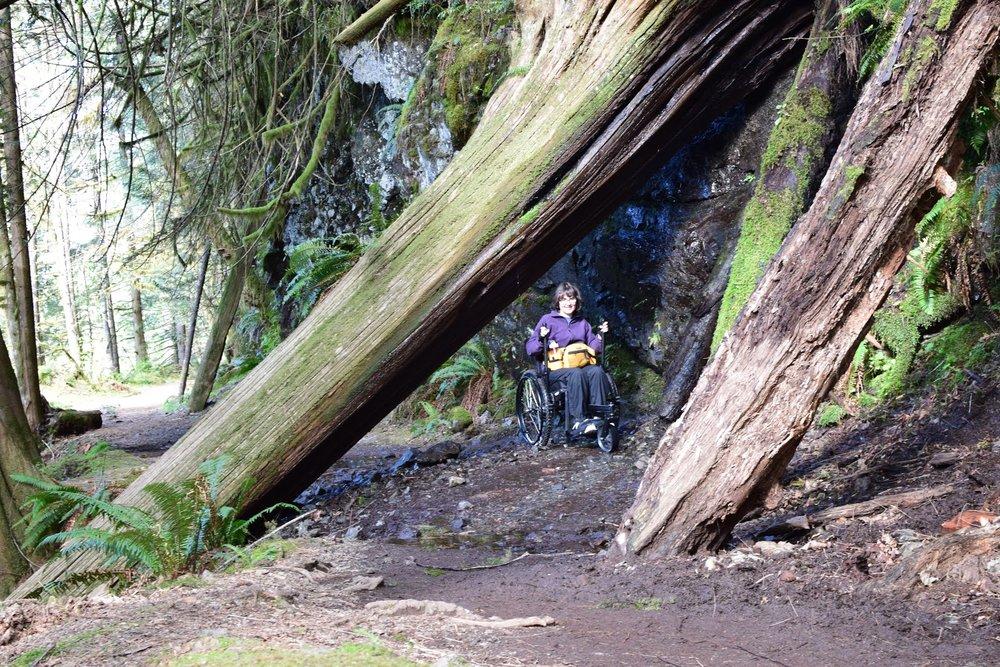 Western Washington Woods