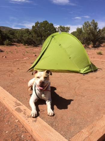 Here is my Service Dog, Cash, thrilled to have our tent set up at our campsite in Colorado National Monument.