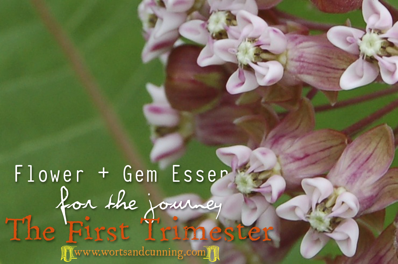 First Trimester Flower Gem Essences