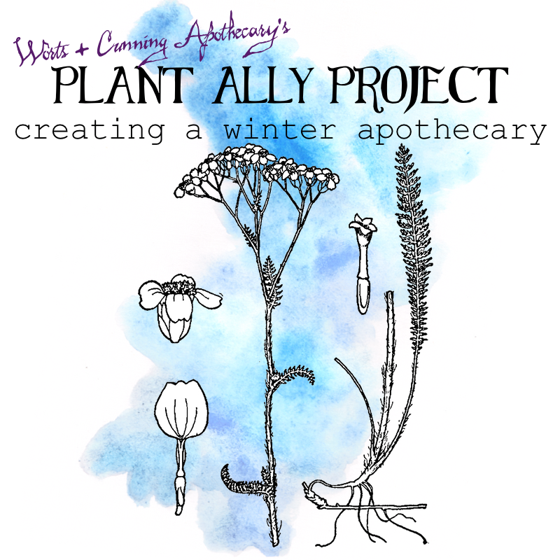 Plant Ally Project Winter Apothecary.png