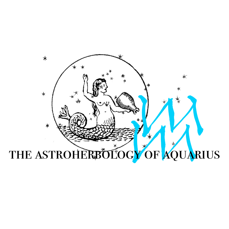 Aquarius: The Astroherbology Profile — Worts + Cunning Apothecary
