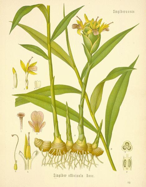 image via  botanical.com