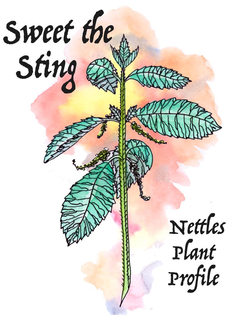 Sustaining the Spirit : Elecampane Plant Profile — Worts +