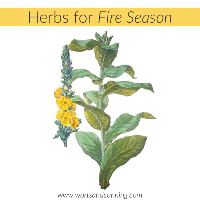 herbs for fire season