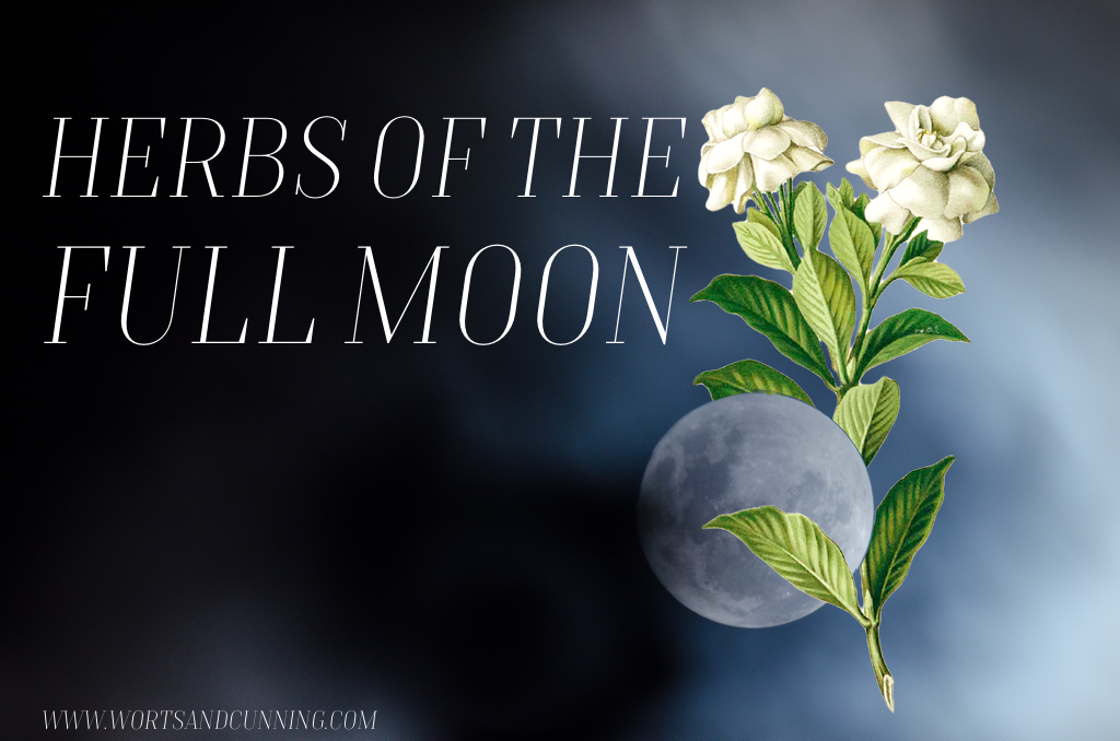 Herbs of the Full Moon — Worts + Cunning Apothecary | Live