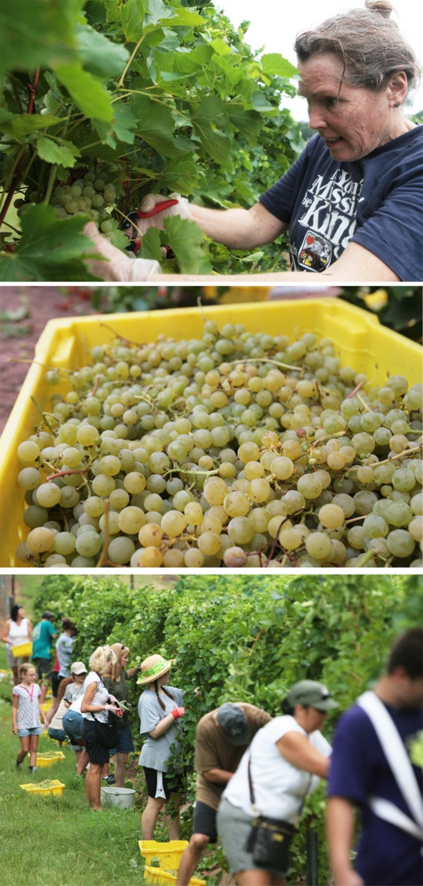 The Harvest:   Recently, I shot at Landry Vineyard out in west Ouachita Parish. Check them out here:  http://www.landryvineyards.com/  I was impressed, I didnt know Louisiana was good for wine.