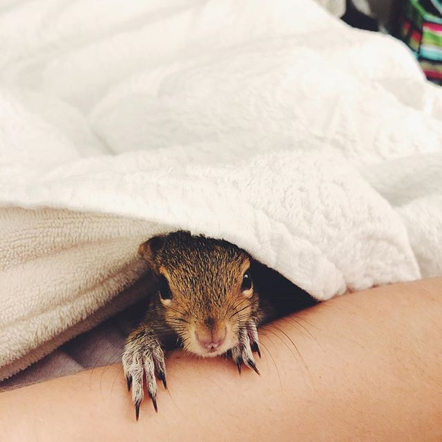 "Some of you have seen little Boo Radley ""Boo""  the baby squirrel that I am currently rehabbing. I share a bunch of posts on my personal account but like this post and comment if you want to see insta stories of Boo!!💙🍼 #booradleythesquirrel #squirrelrehab #squirresofinstagram #wildliferehab #babysquirrel #cutenessoverload #animalsofinstagram #blogger #lifestyleblogger #squirrel #ootd #fashionblogger #nature #photography"