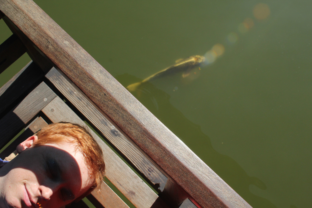 Dream-fish1.jpg
