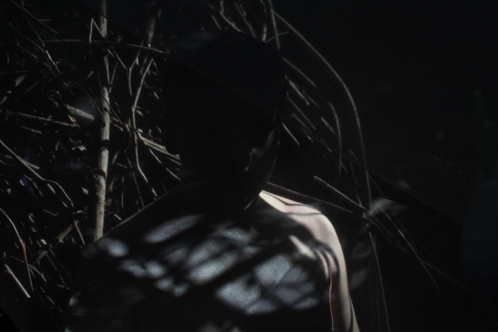 Shadows-Trees-1.jpg