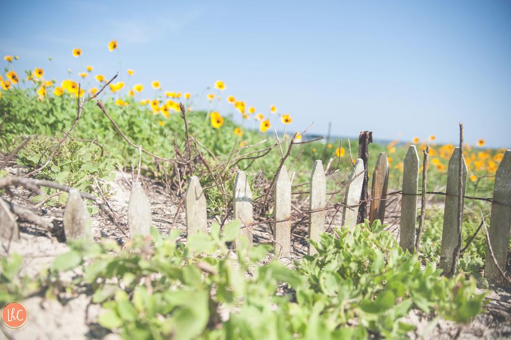 J Beach Web-74.jpg