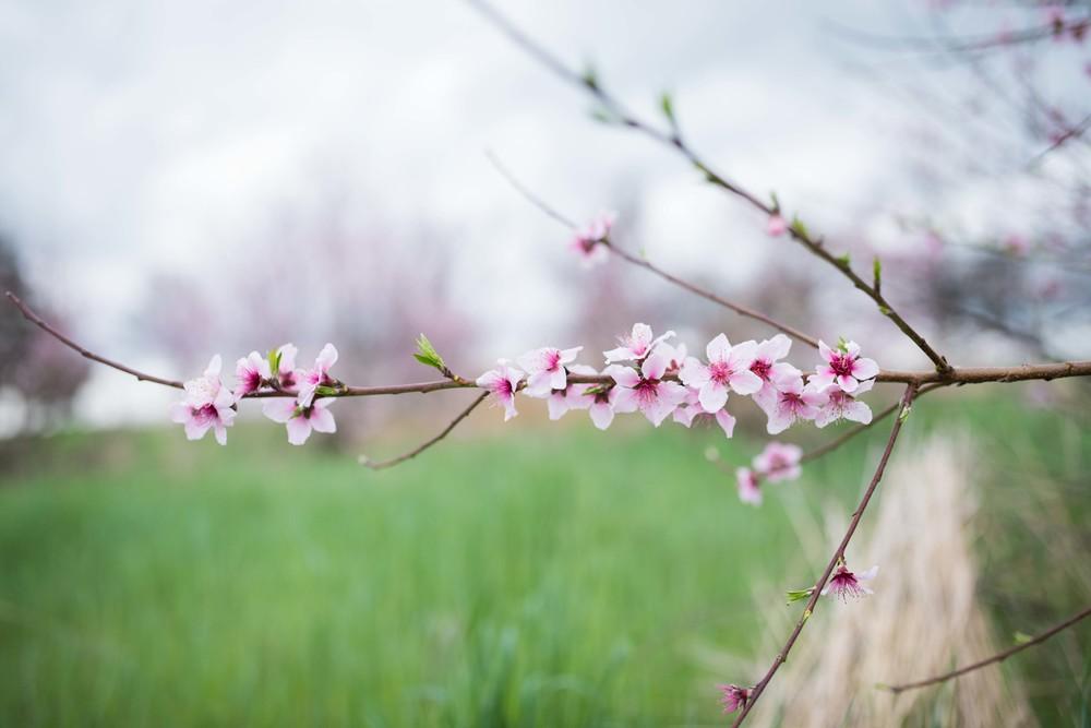 blossom 16-9.jpg
