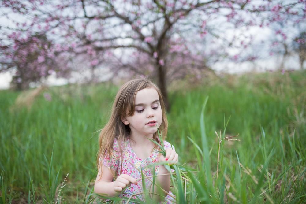 blossom 16-35.jpg