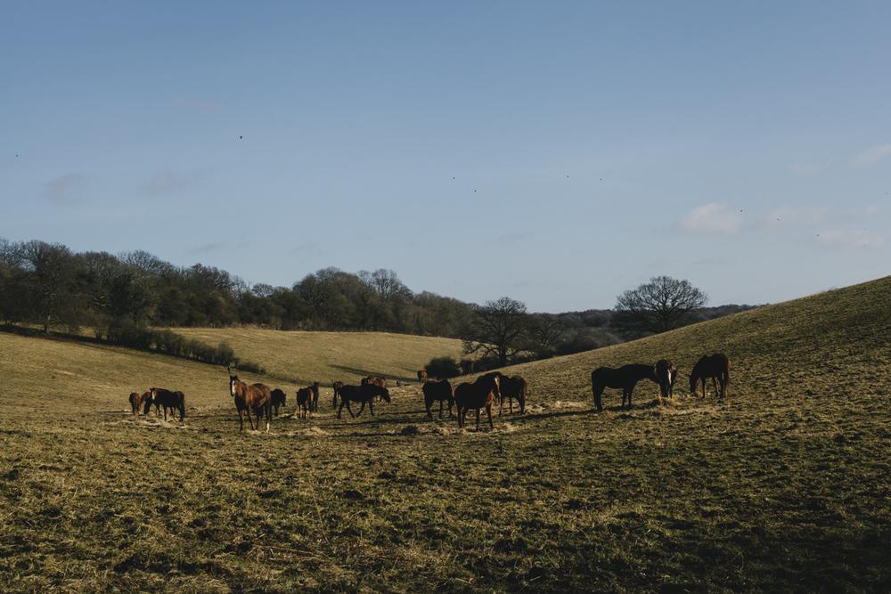 workinghorses