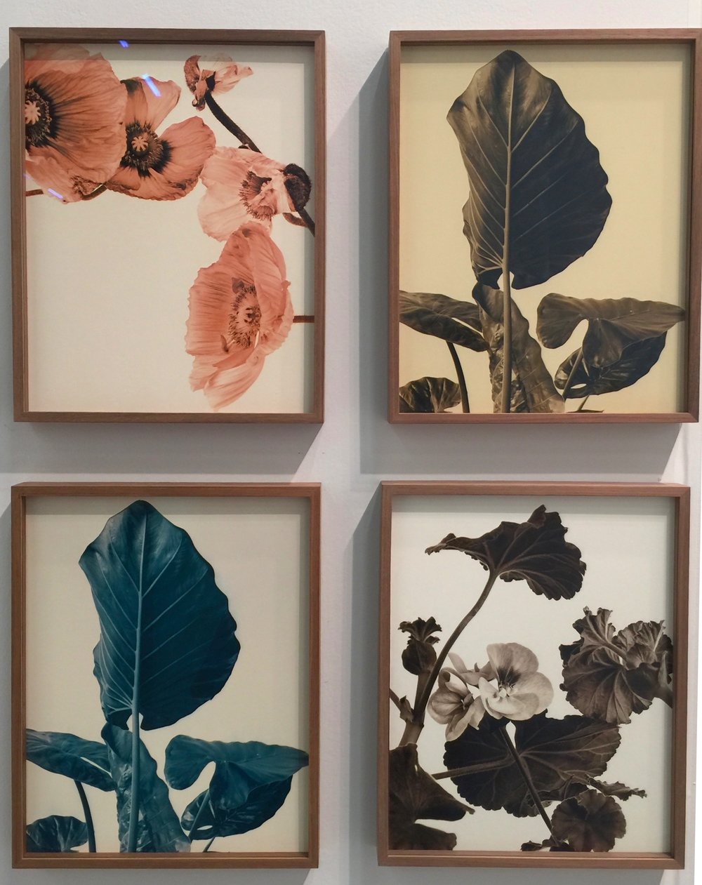 Ulrich Schmitt, Flower Studies, 2000-6, Exhibited by Galerie f5,6