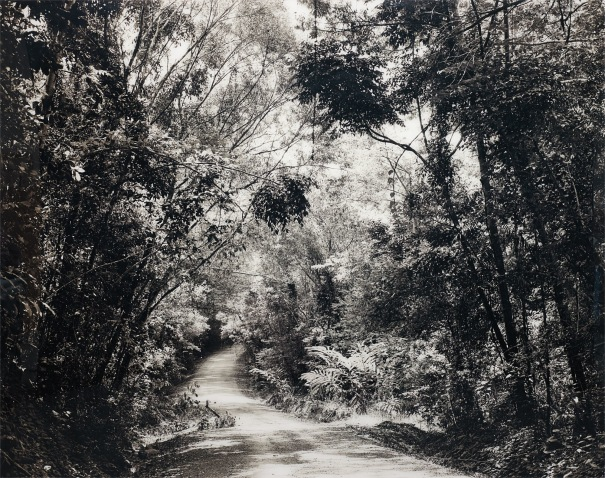 Thomas Struth, Paradise 29, Paradise 8 (Blumfield Track), Daintree, Australia, 1998