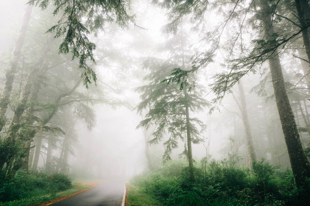 ©The Ryans Photography_Foggy Trails, Oregon-001.jpg