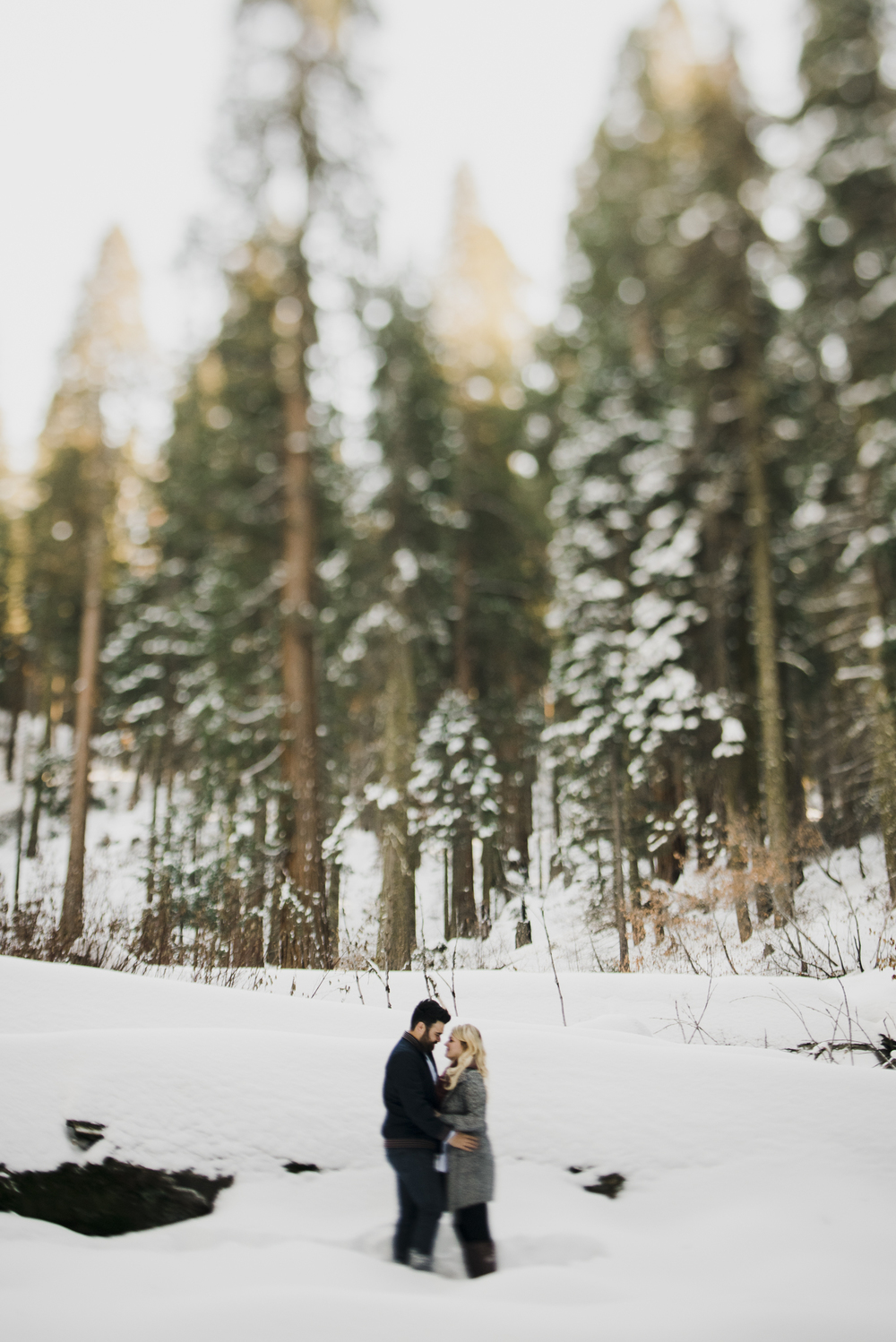 ©Isaiah-&-Taylor-Photography---George-&-Alyssa-Engagement---Sequoia-National-Park,-California-8.jpg