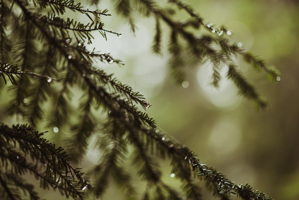 ©Isaiah-&-Taylor-Photography---Hidden-Lake-Cascade-Mountains-Engagement,-Washington-021.jpg