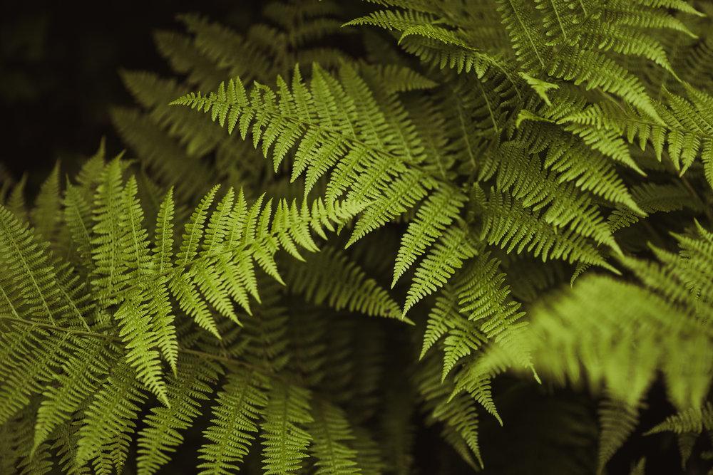 ©Isaiah-&-Taylor-Photography---Hidden-Lake-Cascade-Mountains-Engagement,-Washington-026.jpg