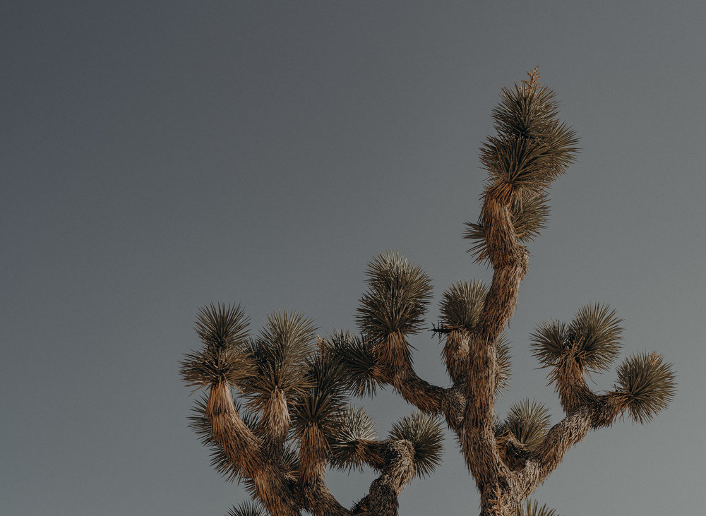 Joshua Tree Elopement - Los Angeles Wedding Photographers - IsaiahAndTaylor.com-001.jpg