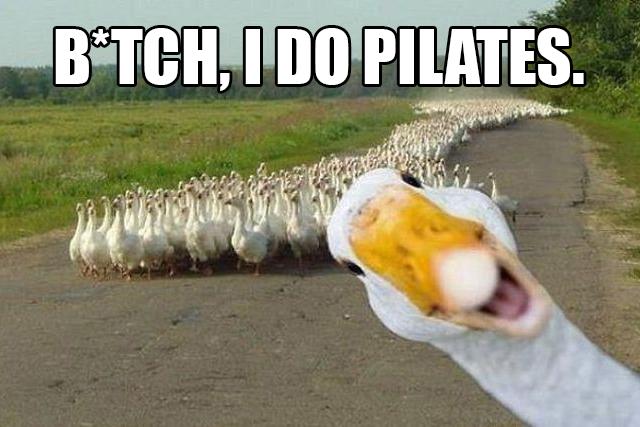 duck copy.jpg