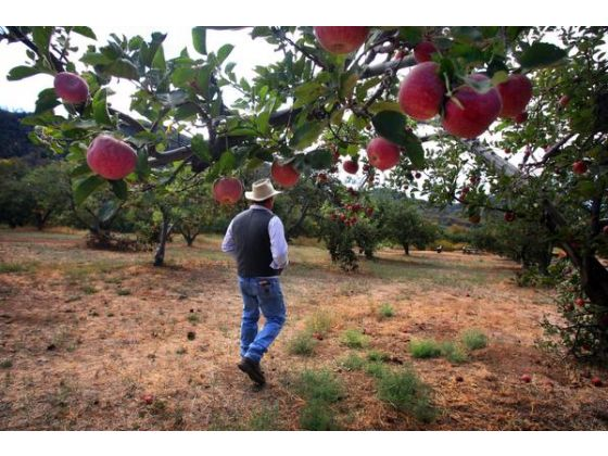 Los Rios Rancho Apple Farm (Photo Credit: Kurt Miller)