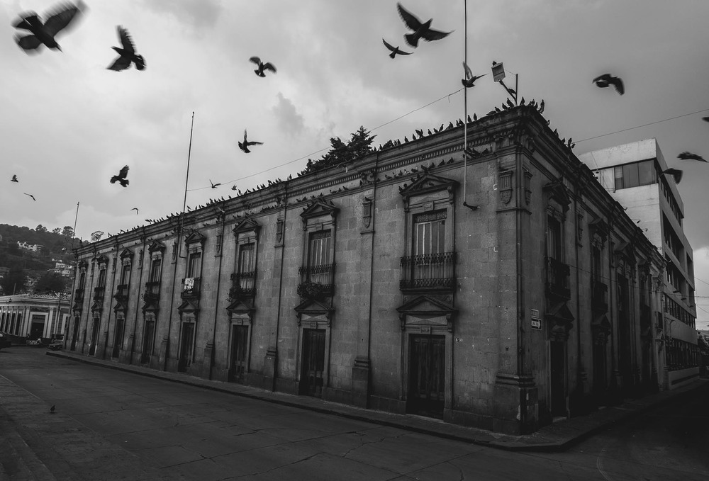 Colonial building covered in pigeons in Xela. Guatemala