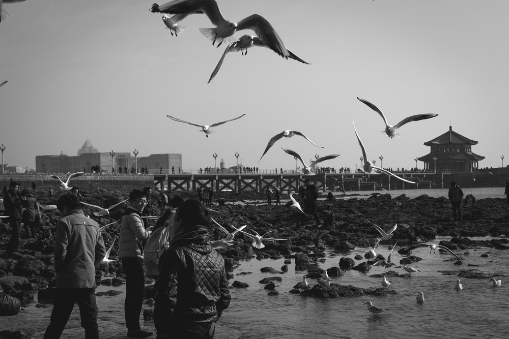 People and seagulls on the beach in Qingdao. China