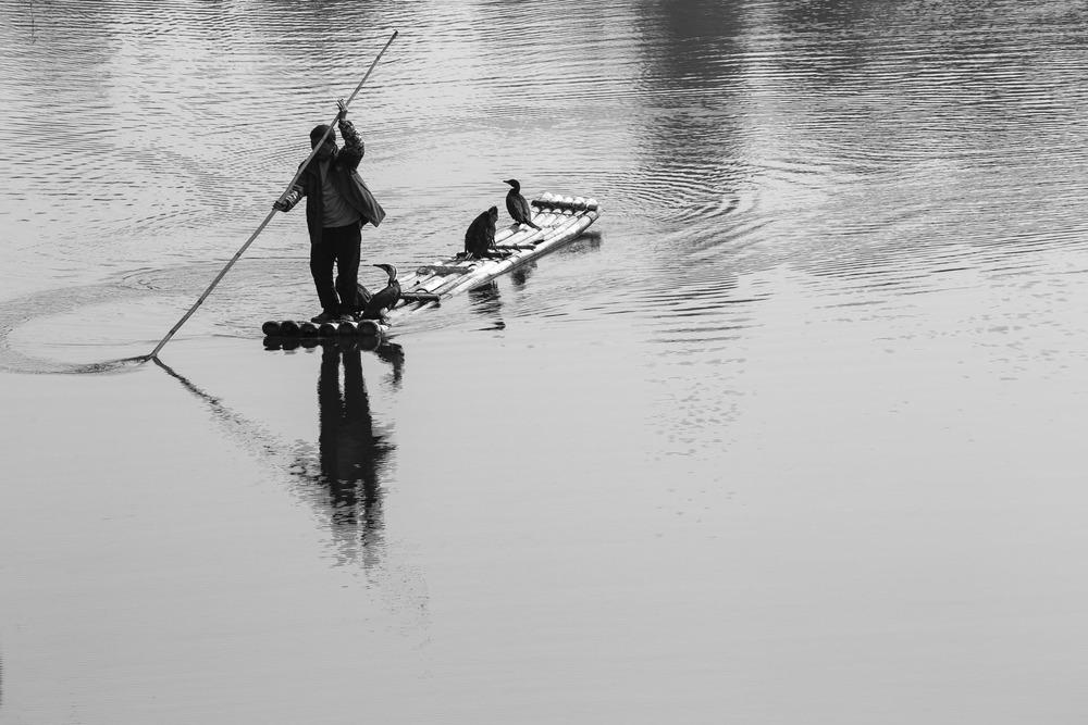 Bird fisherman on the Li River. China