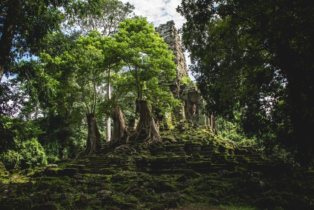 Half buried ruins of Angkor. Cambodia