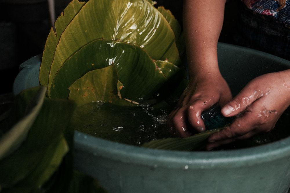 Washing the maxán leaf for the tamalitos de chipilín.
