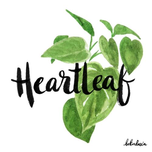 Heartleaf.jpg