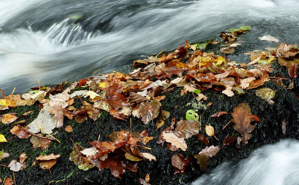 Day_01_photos_river_02.jpg