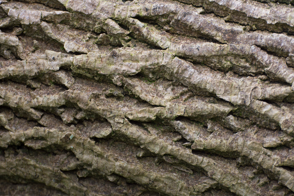 An example of 'The Grid' in tree bark.