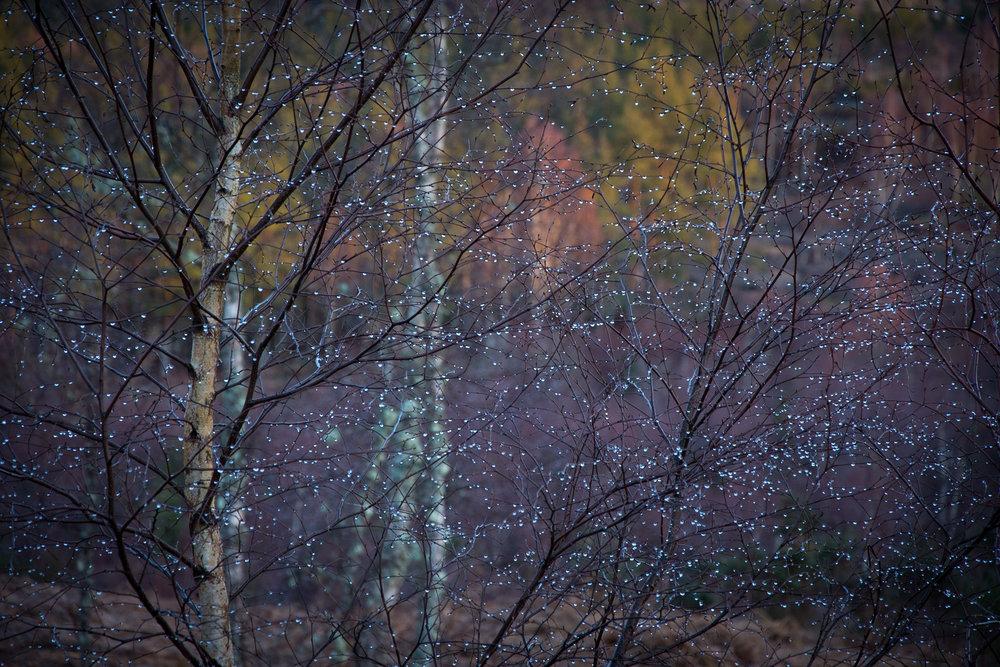 Lakes-Scotland-Trip_562.jpg