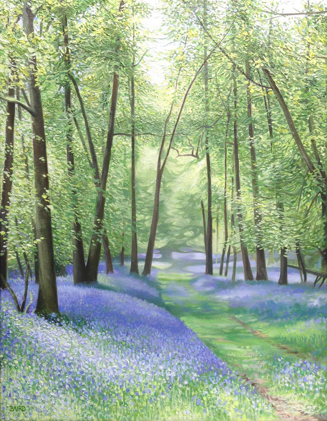 Bluebell Glade - Oil on canvas45.5cm x 35.5cmSOLD