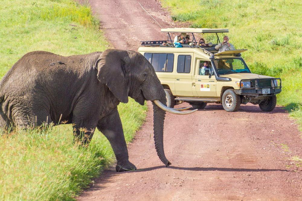 cruiser with elephant crossing.jpg