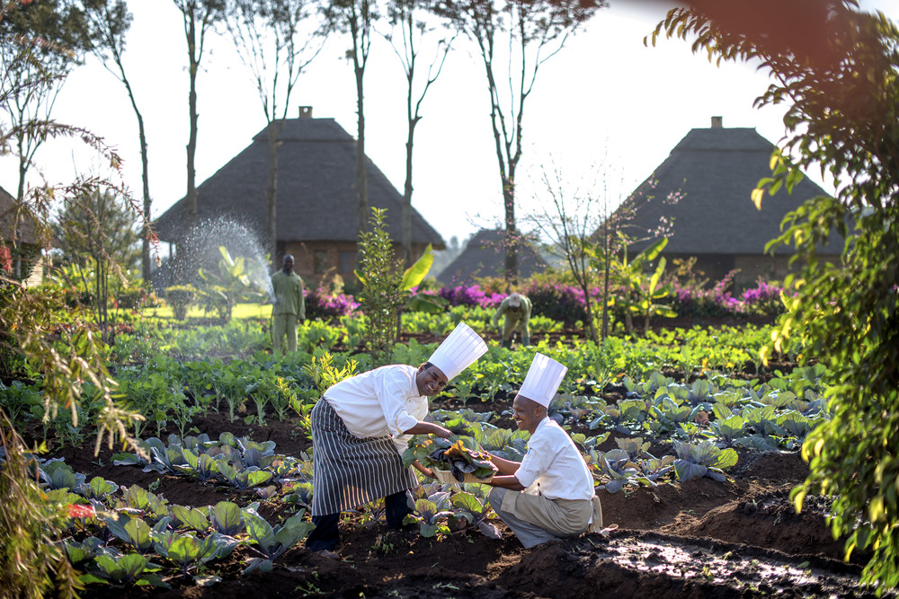 Ngorongoro - chefs in potager_original.jpg